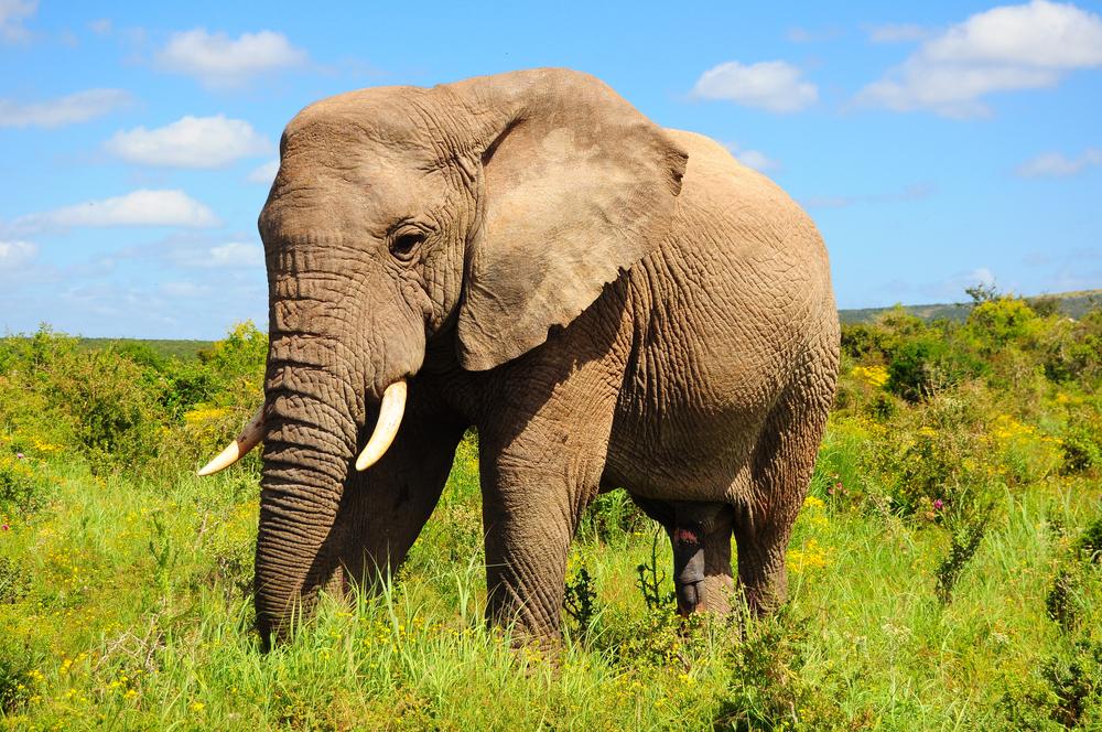 Hình ảnh đẹp về con voi
