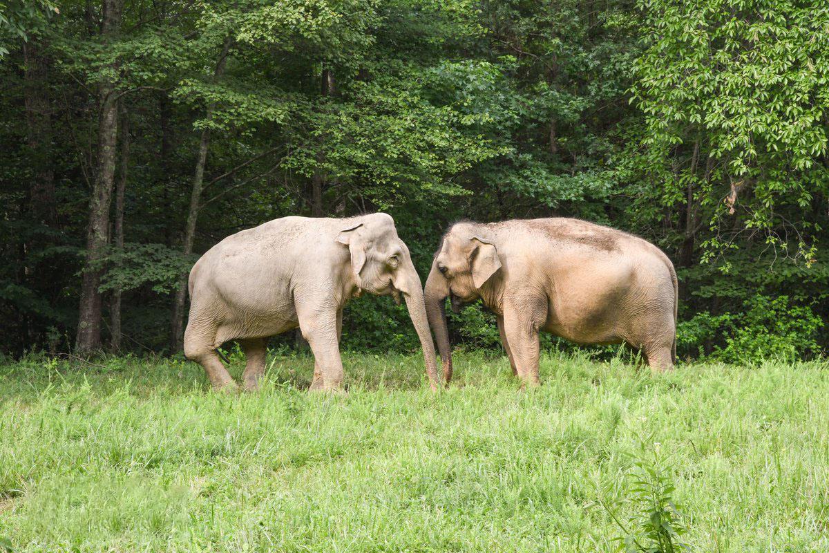 Hình ảnh hai con voi