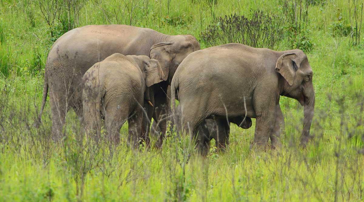 Hình ảnh những con voi đẹp nhất