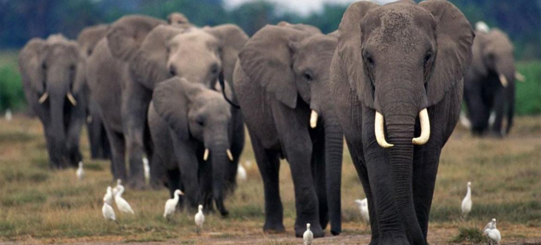 Hình ảnh những con voi đẹp
