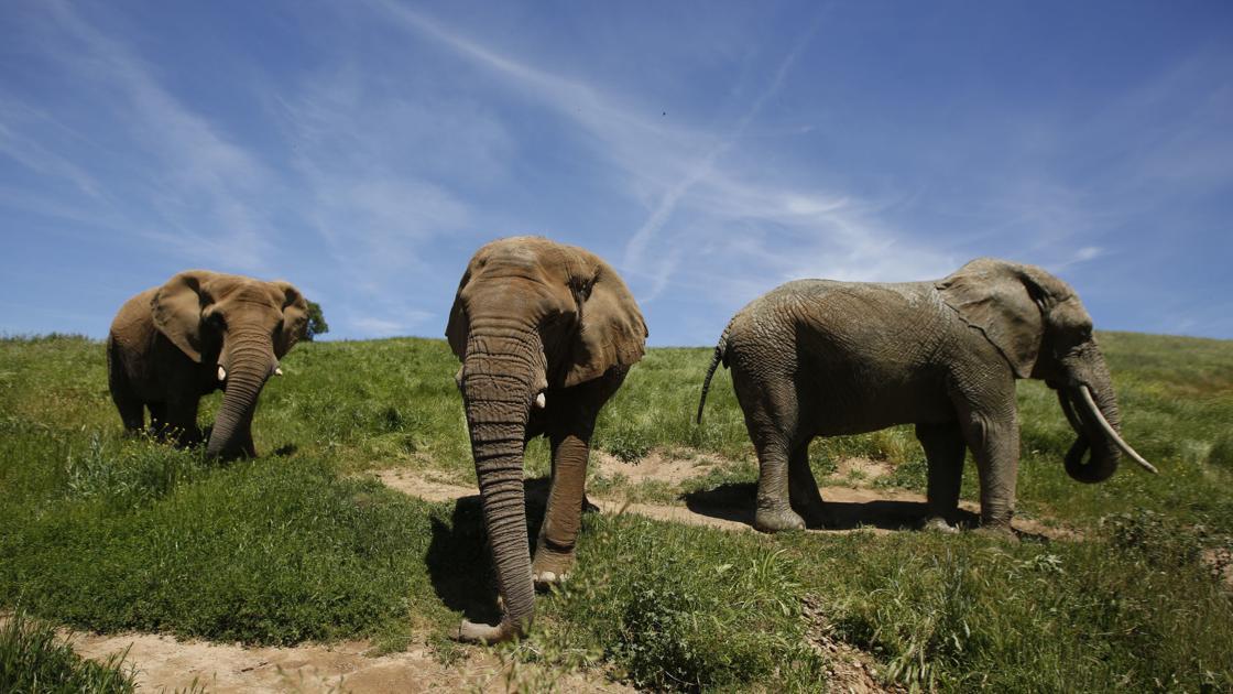 Hình ảnh về con voi