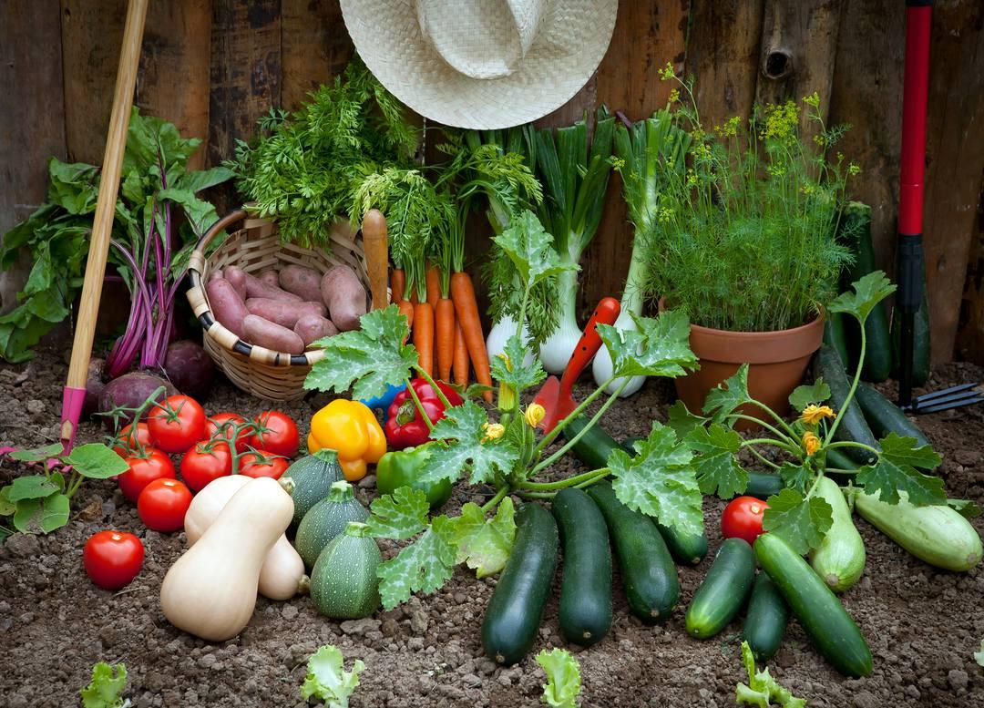 Hình ảnh vườn rau củ quả