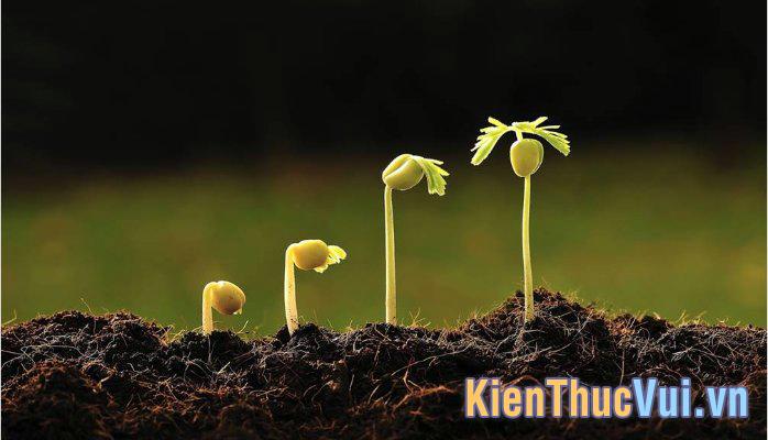 Khái niệm về Seeding