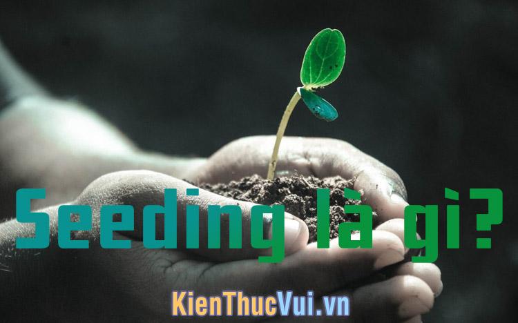 Seeding là gì? Tầm quan trọng của Seeding trong Marketing?