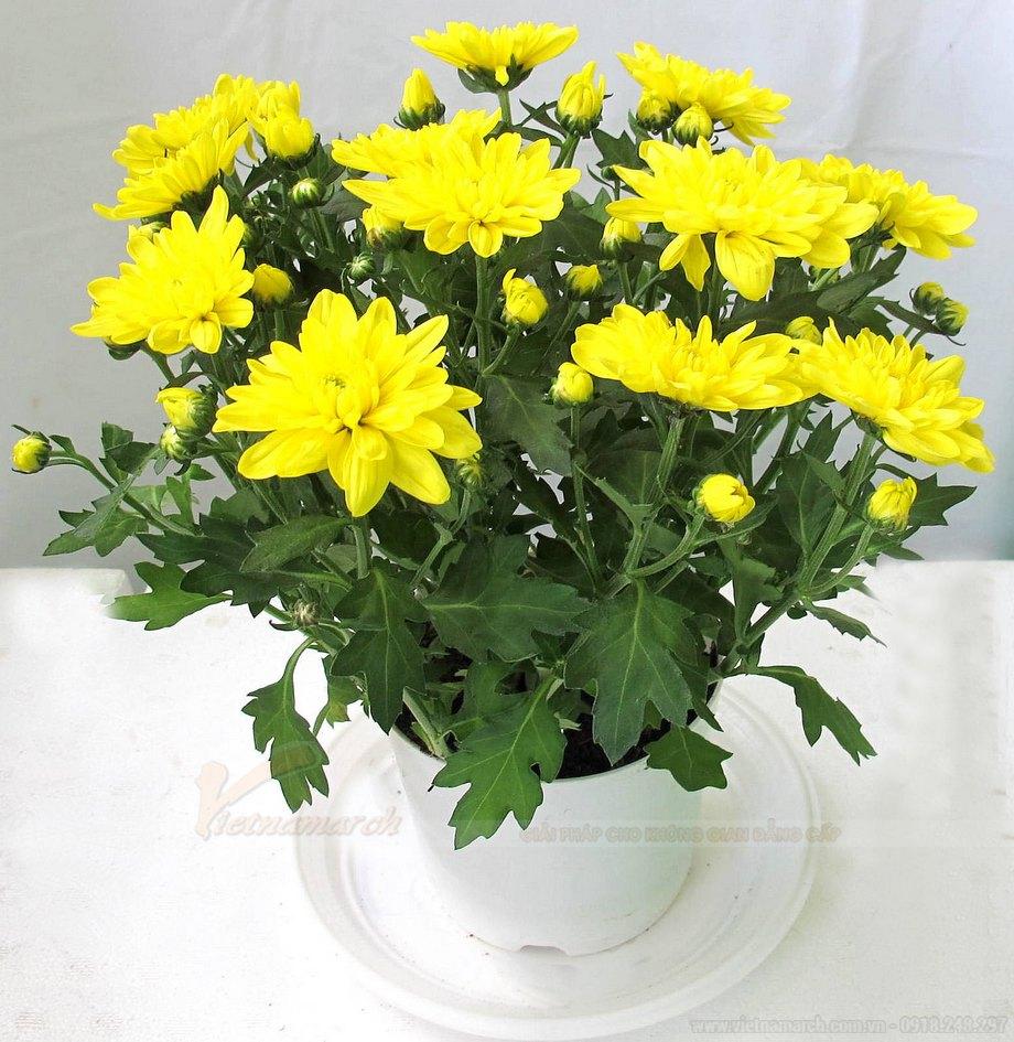 Ảnh cắm hoa bàn thờ ngày Tết đẹp nhất