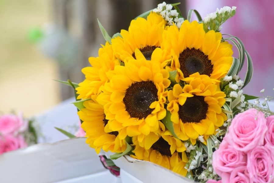 Hoa Hướng Dương mẫu cắm hoa đẹp nhất