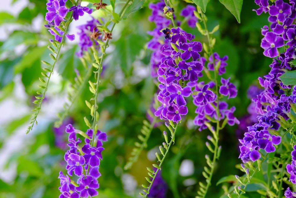Hình ảnh hoa màu tím đẹp nhất