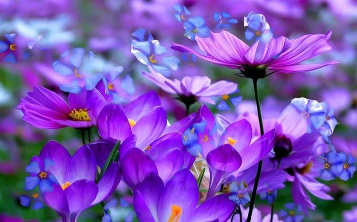 Hình ảnh hoa màu tím