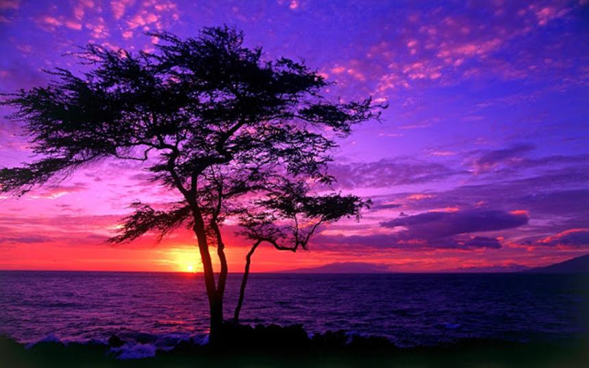 Hình ảnh hoàng hôn màu tím trên biển đẹp nhất