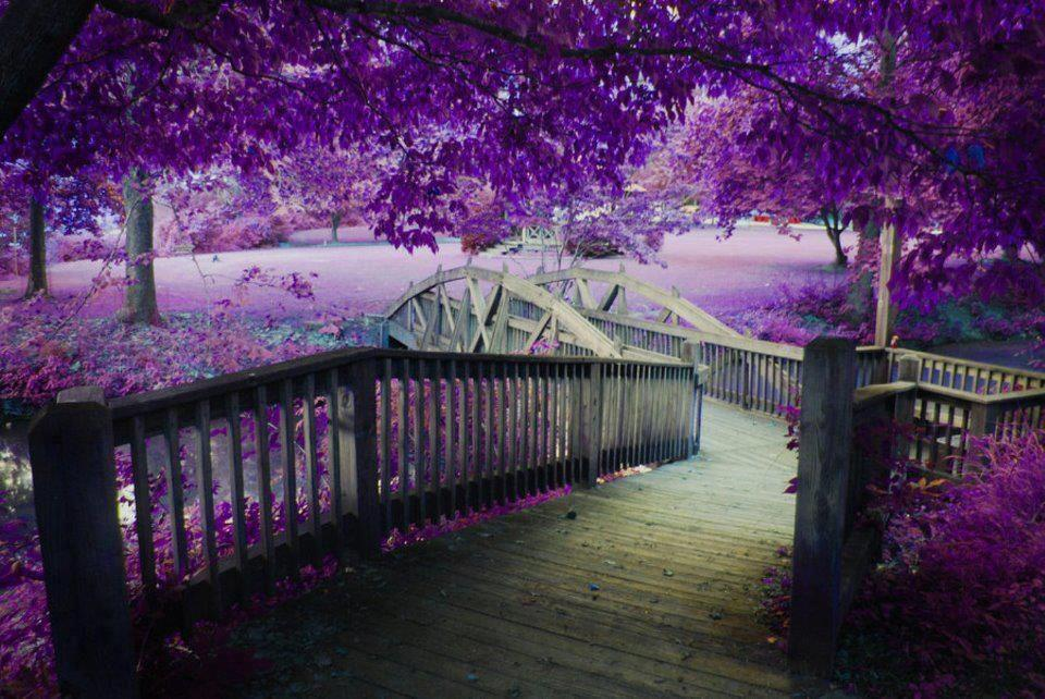 Hình ảnh không gian màu tím đẹp nhất