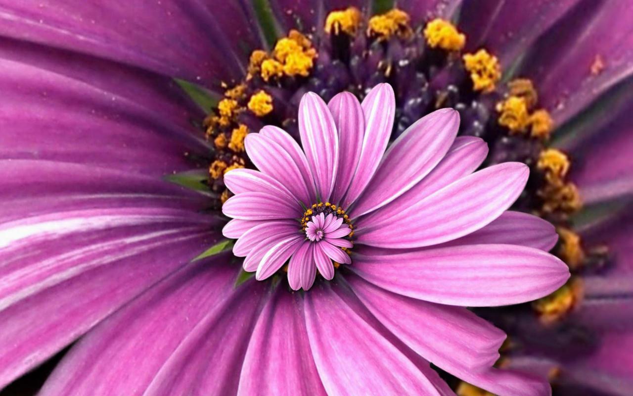 Hình ảnh màu tím đẹp