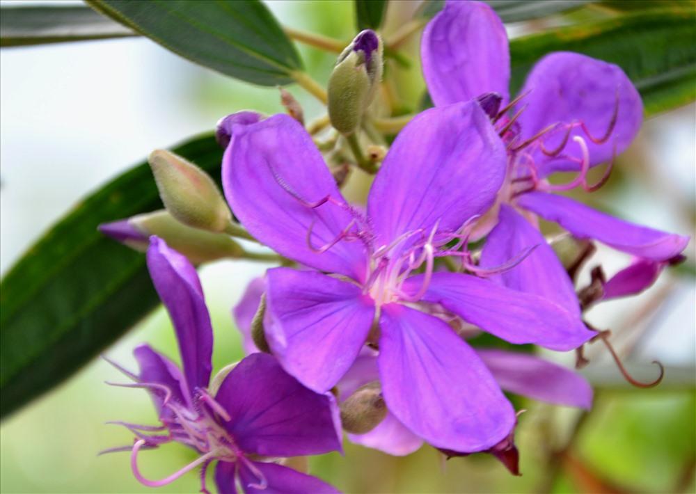 Hoa màu tím đẹp biểu tượng của tình yêu và cuộc sống