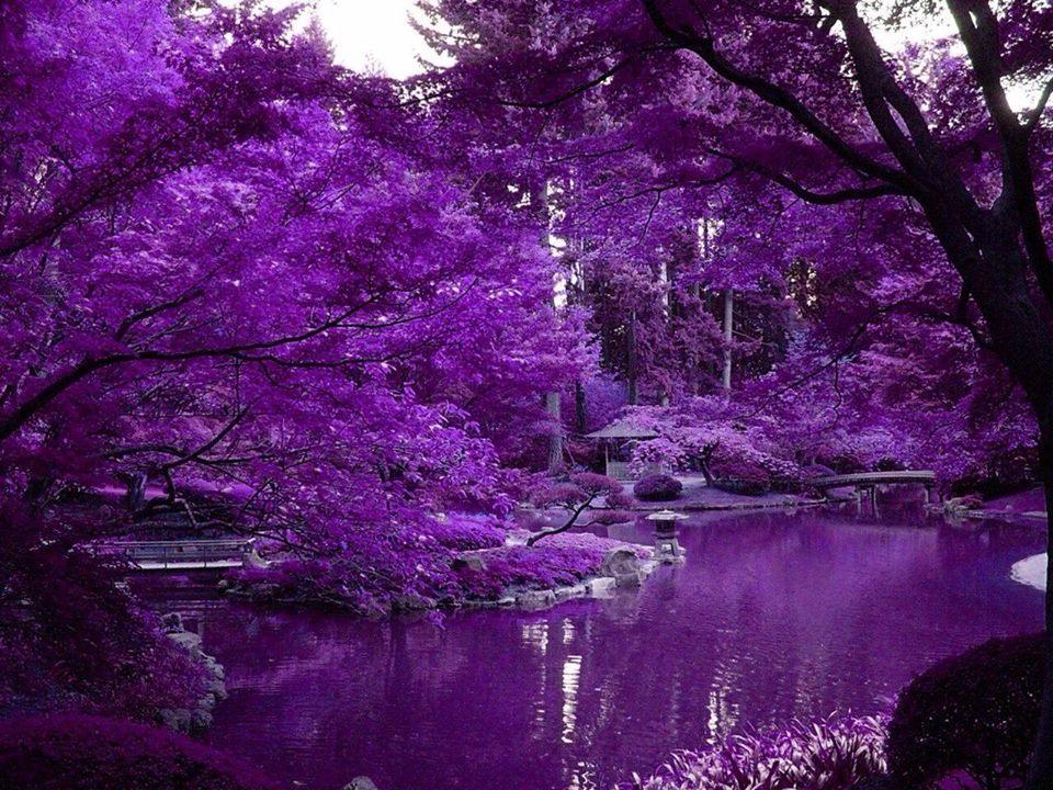 Những hình ảnh buồn về màu tím đẹp
