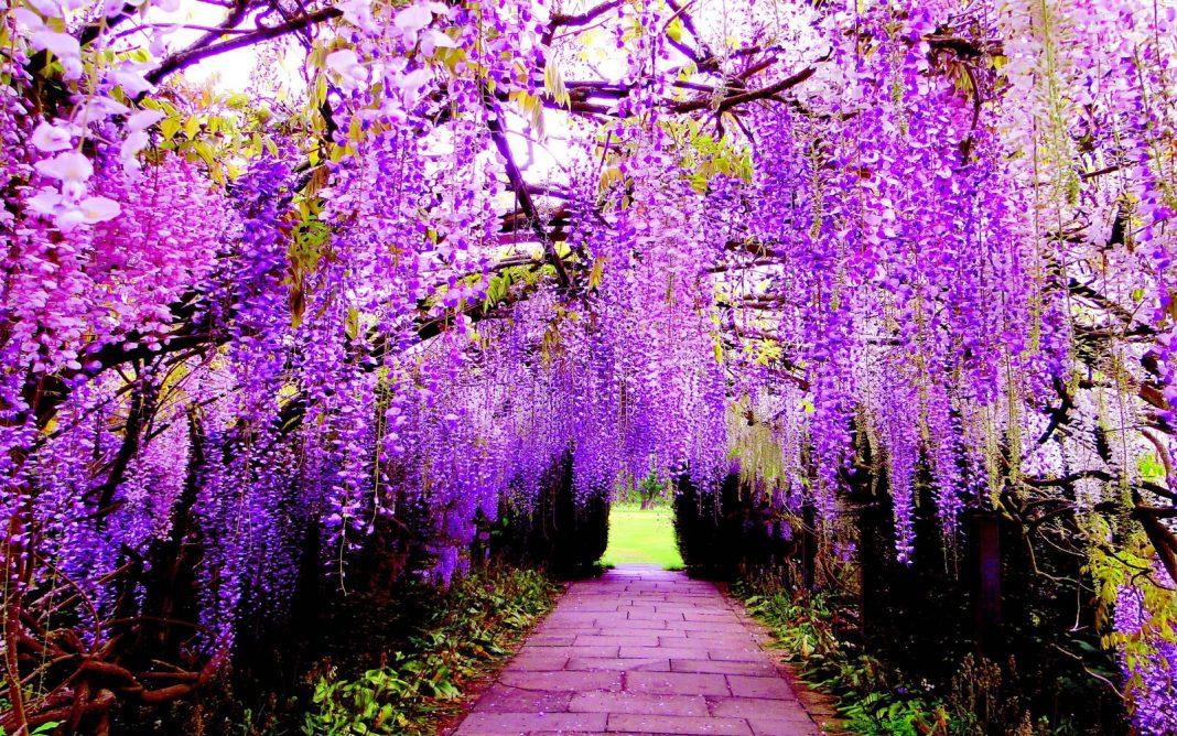 Những hình ảnh hoa màu tím đẹp nhất