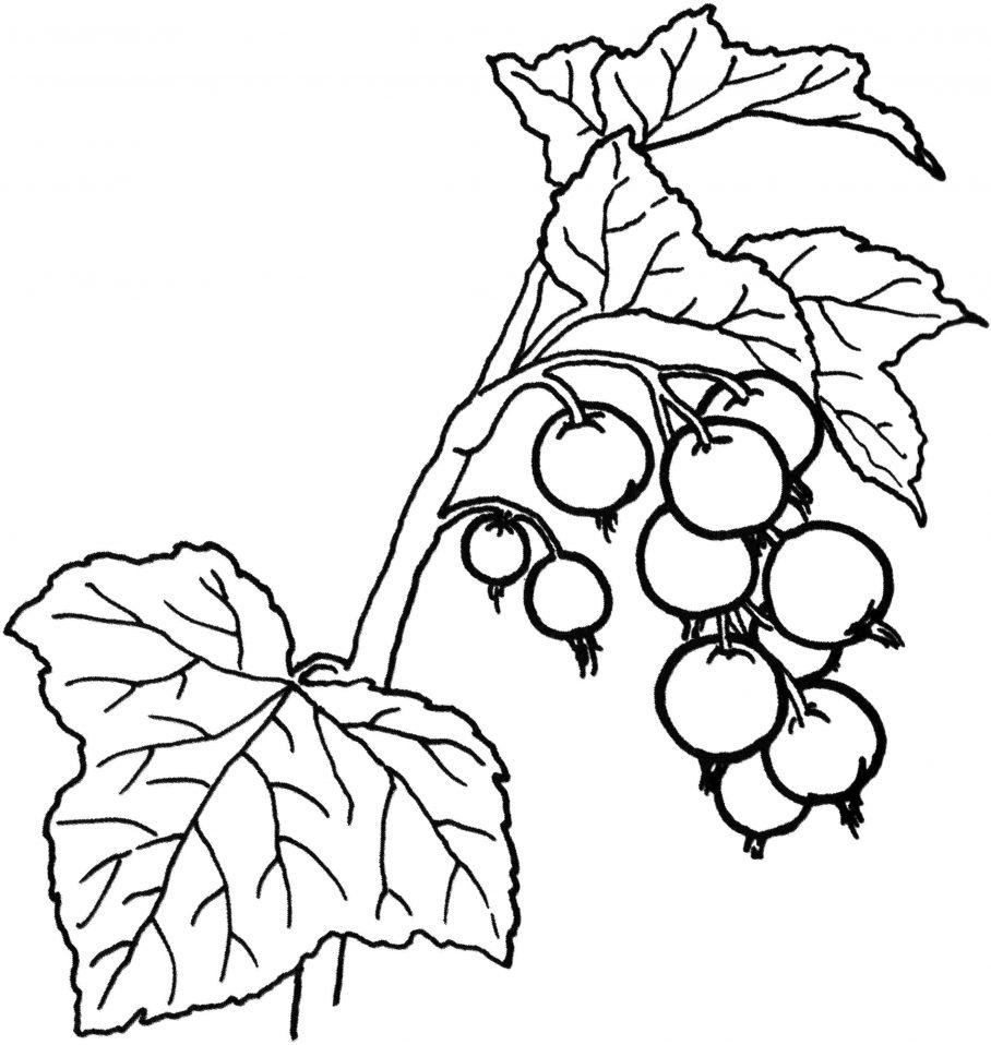 Tranh tô màu các loại quả đẹp nhất