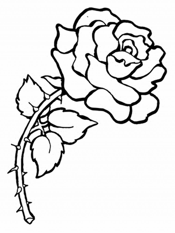 Tranh tô màu hình hoa hồng đơn giản nhất