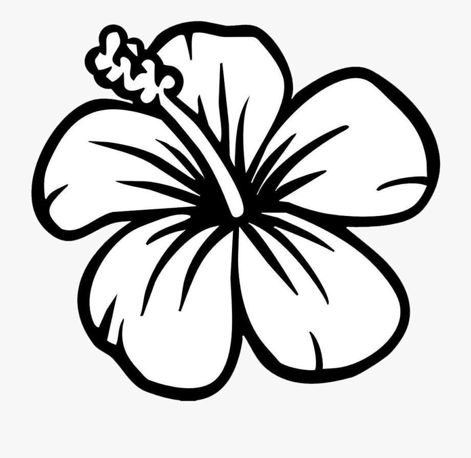 Tranh tô màu hoa dâm bụt