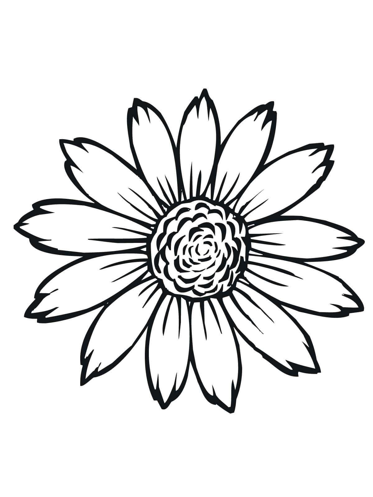 Tranh tô màu hoa đơn giản nhất