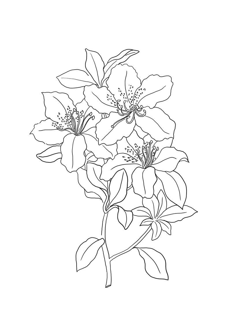 Tranh tô màu hoa lan đẹp