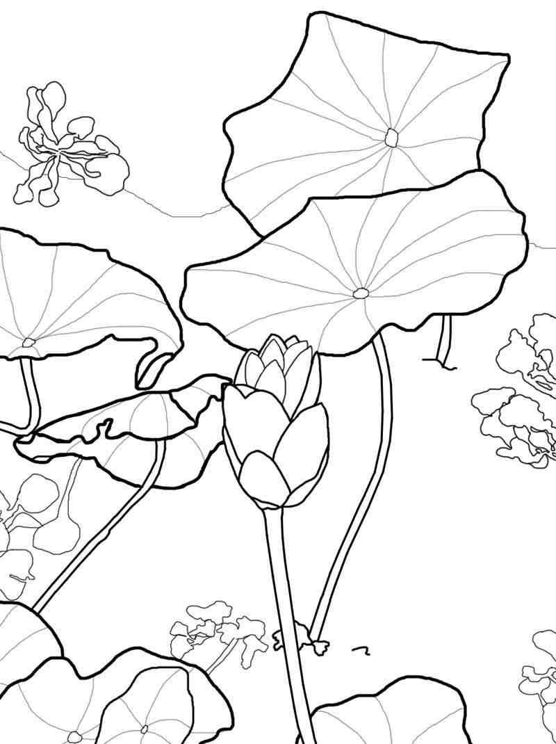 Tranh tô màu hoa sen cho bé tập tô đơn giản nhất