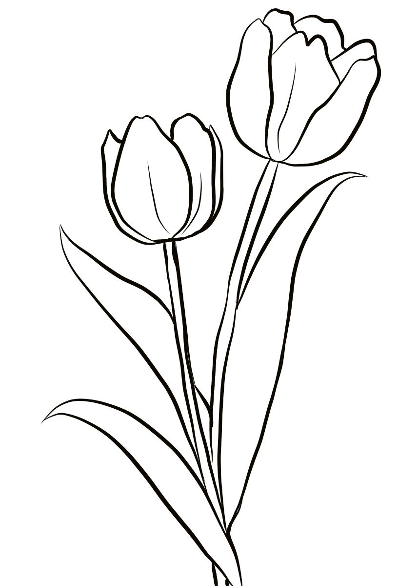 Tranh tô màu hoa tulip đẹp nhất