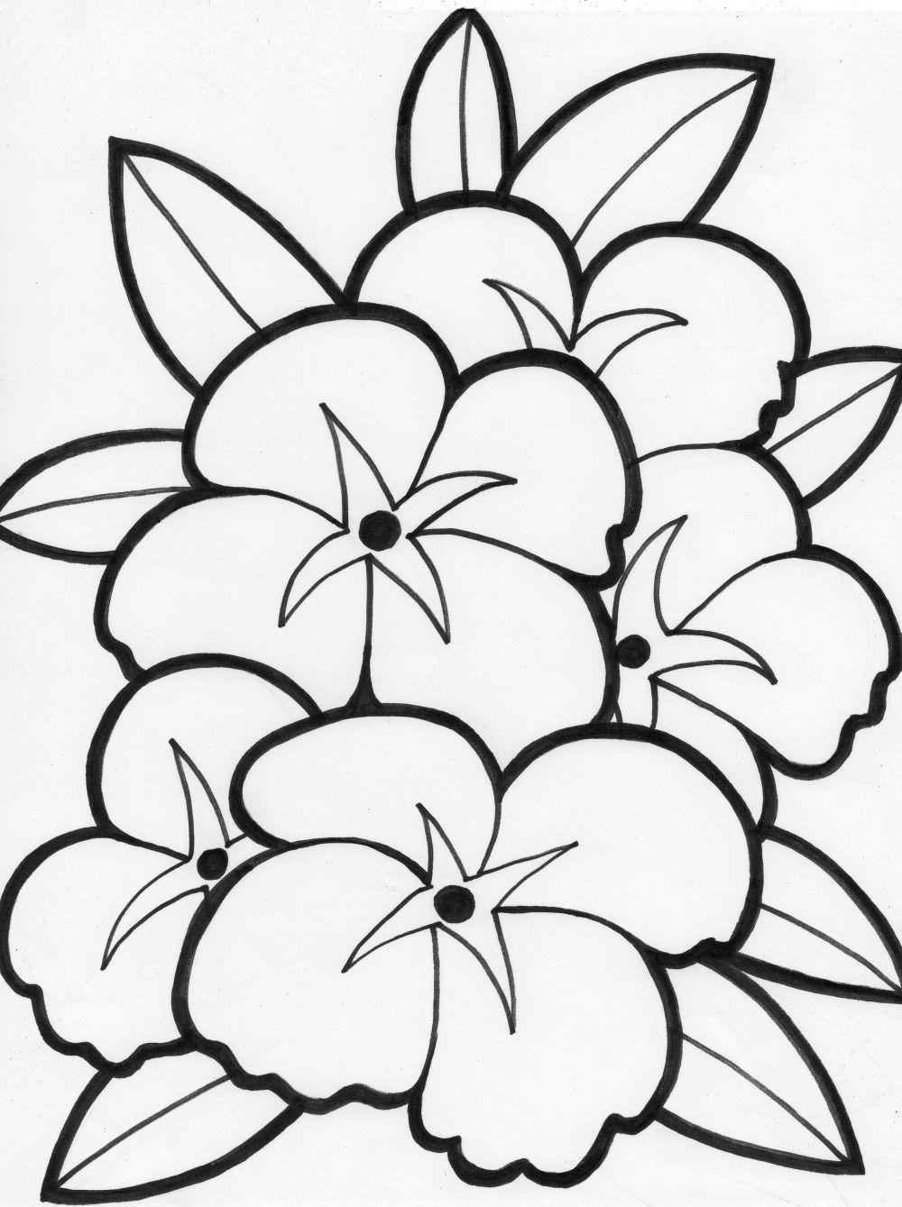 Tranh tô màu hoa tulip đẹp
