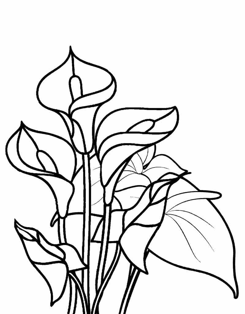 Tranh tô màu khóm hoa loa kèn đẹp nhất
