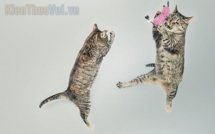 Top những đồ chơi cho mèo hay nhất 2020