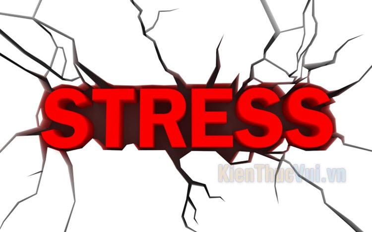 Cách giải tỏa stress hiệu quả