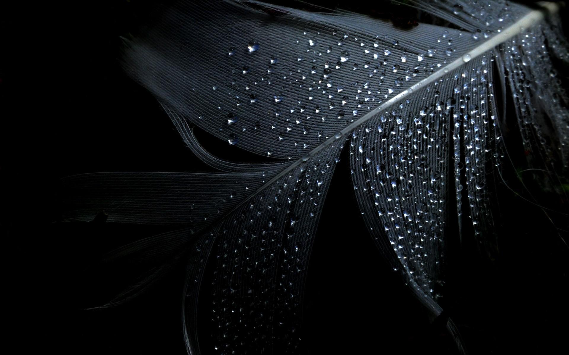 Hình nền đen Wide lông vũ đẹp