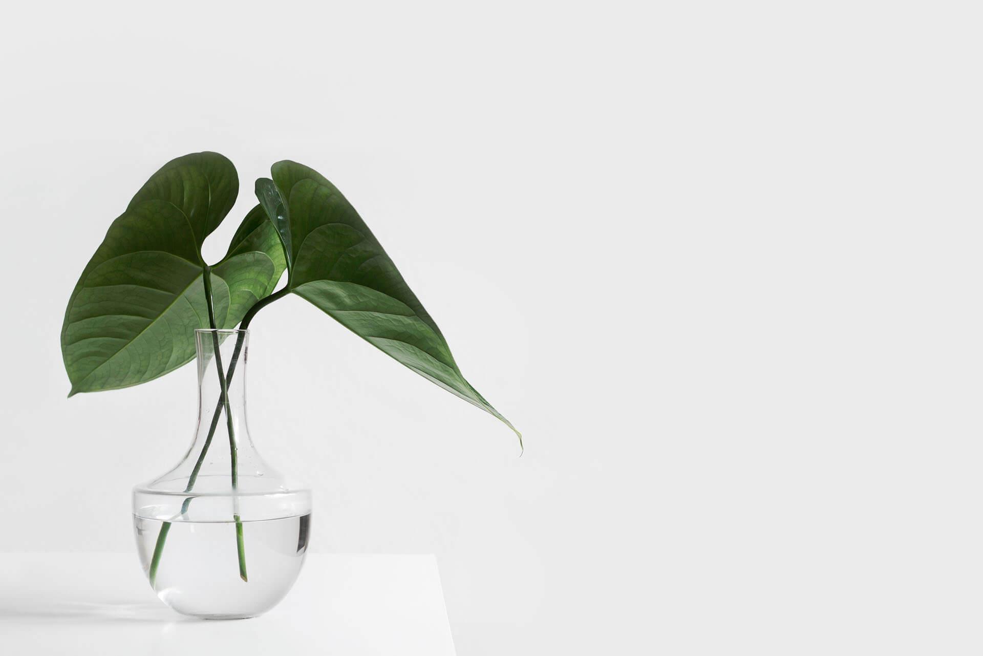 Hình nền trắng HD đơn giản với cây xanh