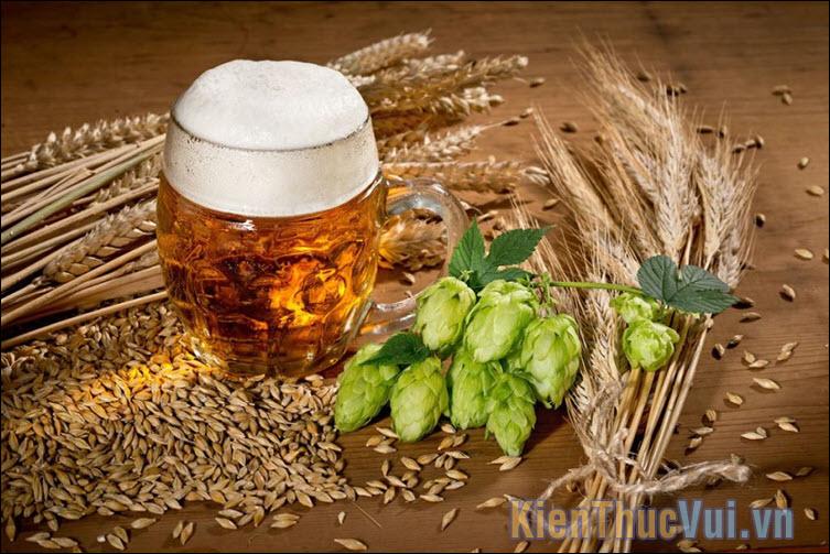 Craft Beer là loại đồ uống có thể sánh ngang với các thức uống tinh tế như rượu vang, cocktail