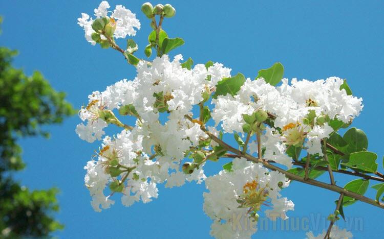 Hình ảnh các loài hoa đẹp
