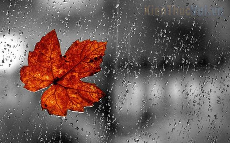 999+ Stt ngày mưa hay nhất
