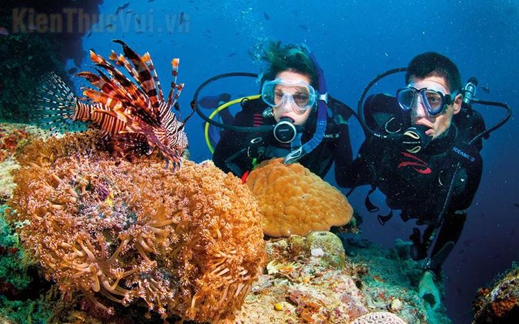 Hình ảnh san hô đẹp