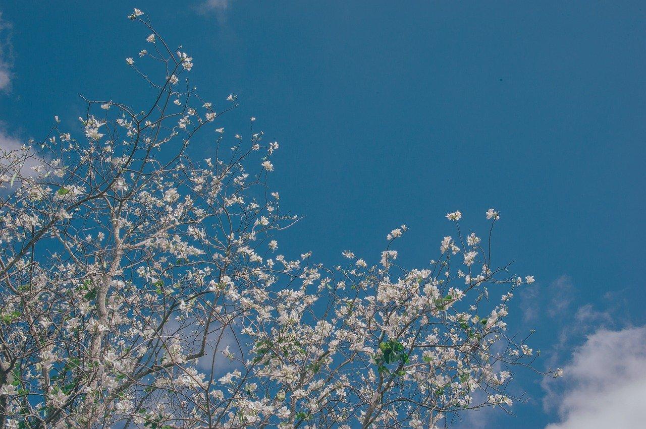 Ảnh bầu trời mùa xuân cực đẹp