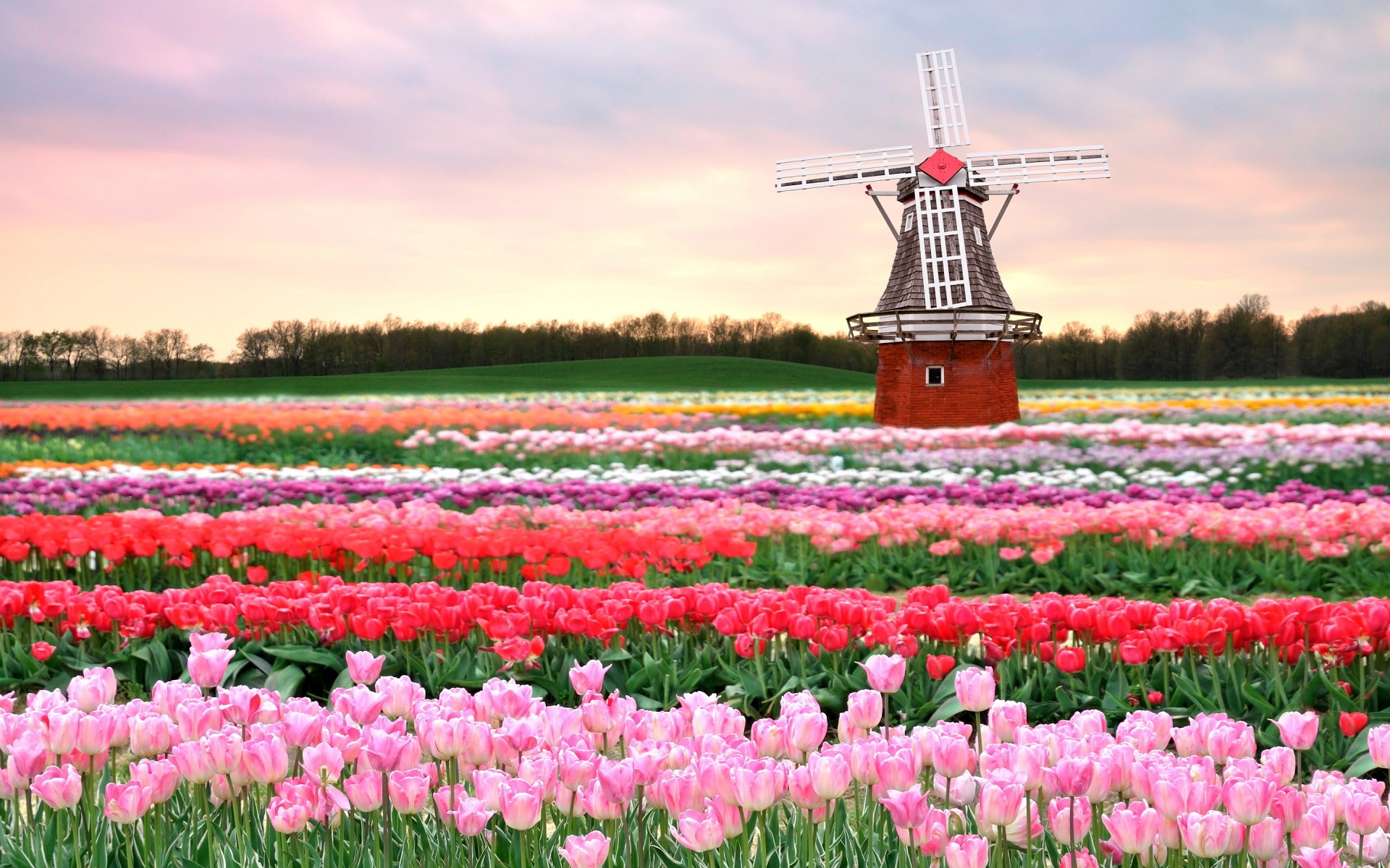 Ảnh cánh đồng hoa mùa xuân