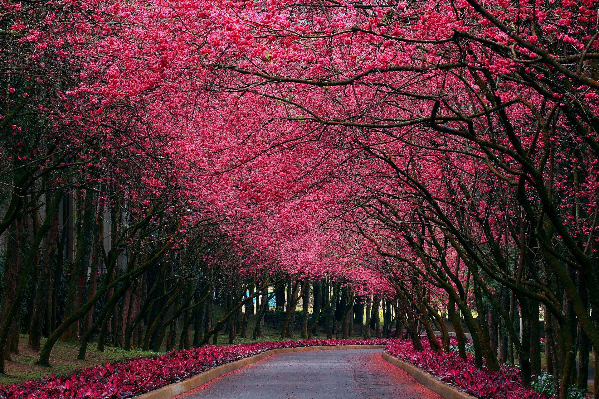 Ảnh đẹp mùa xuân