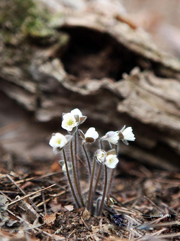 Ảnh đẹp những đóa hoa dại mùa xuân