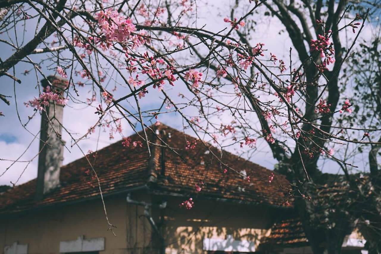 Ảnh đẹp về Đà Lạt mùa xuân