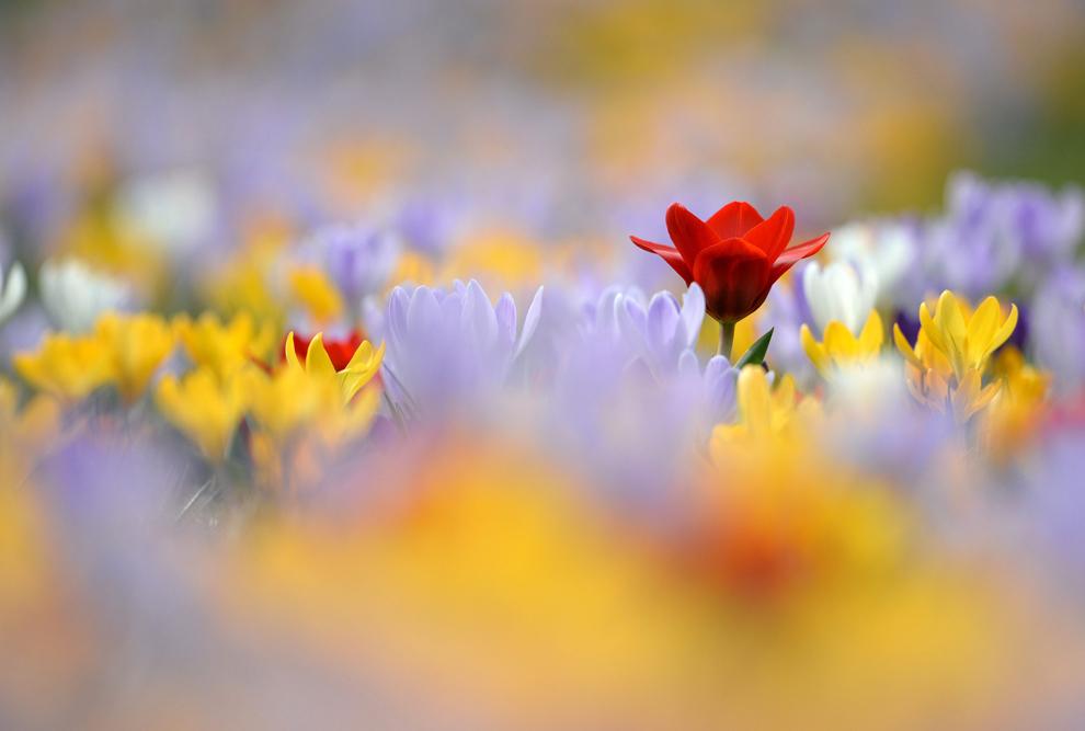 Ảnh khoảnh khắc mùa xuân tuyệt đẹp