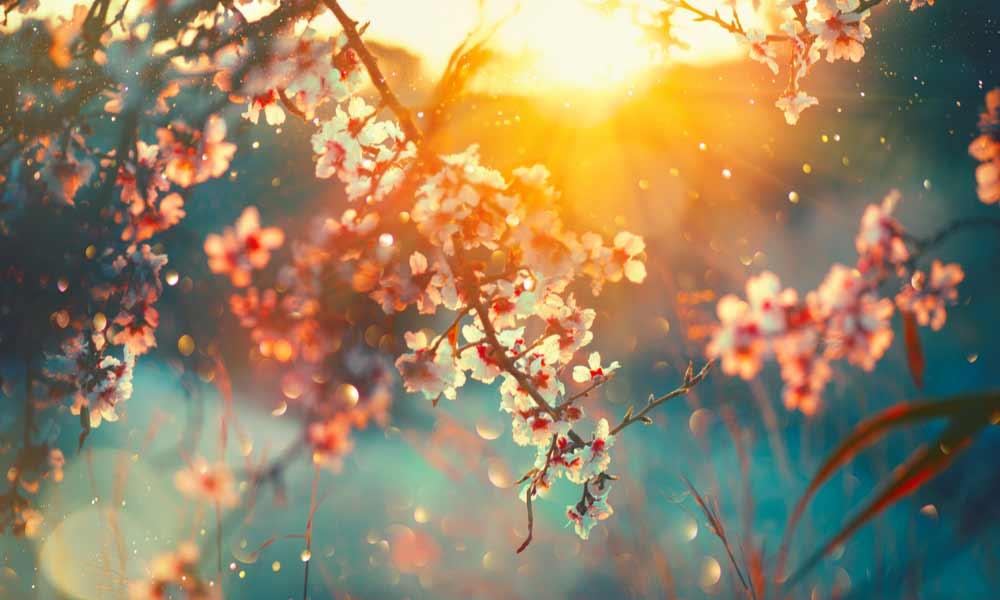 Ảnh mùa xuân đẹp nhất