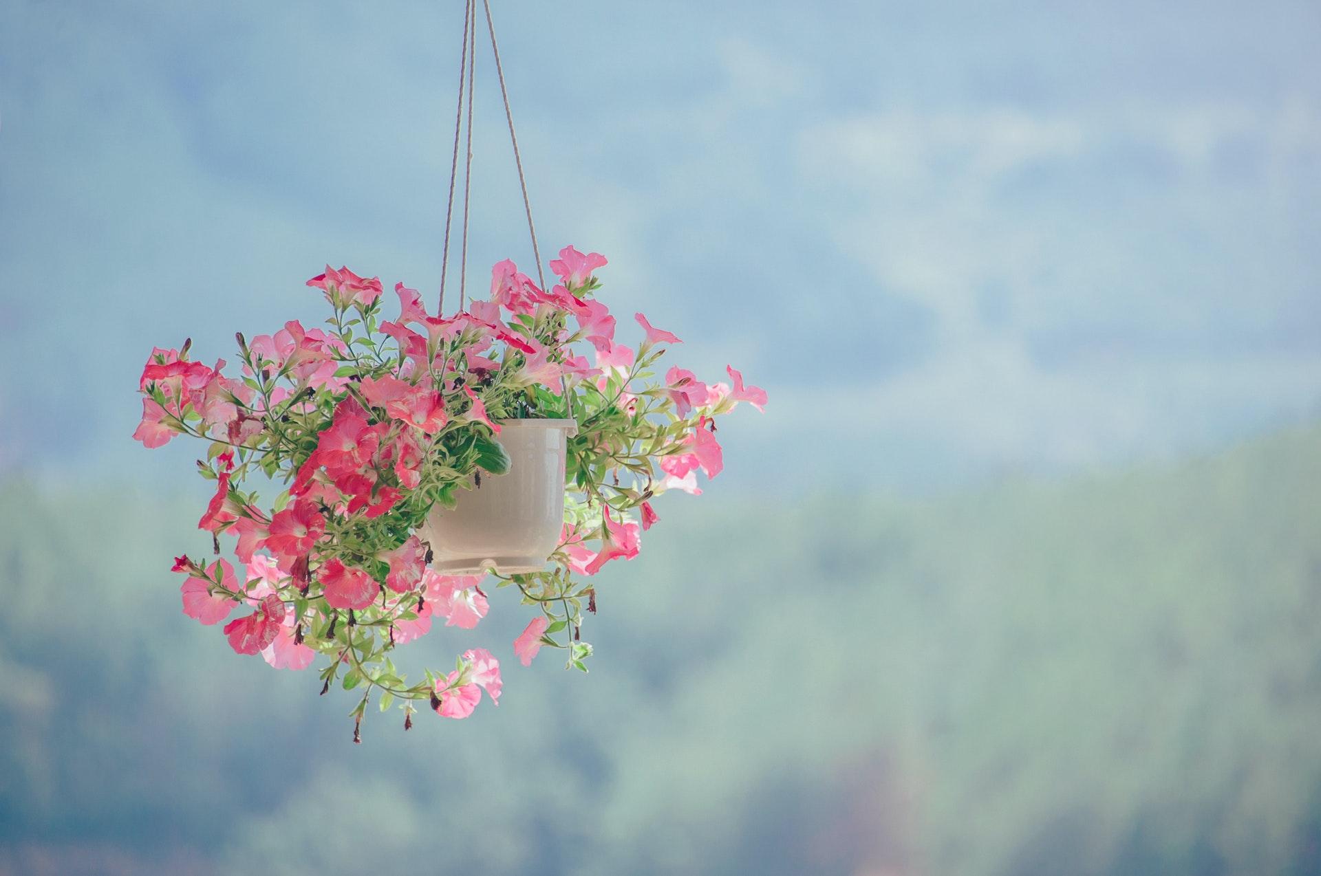 Ảnh mùa xuân đẹp, trong veo