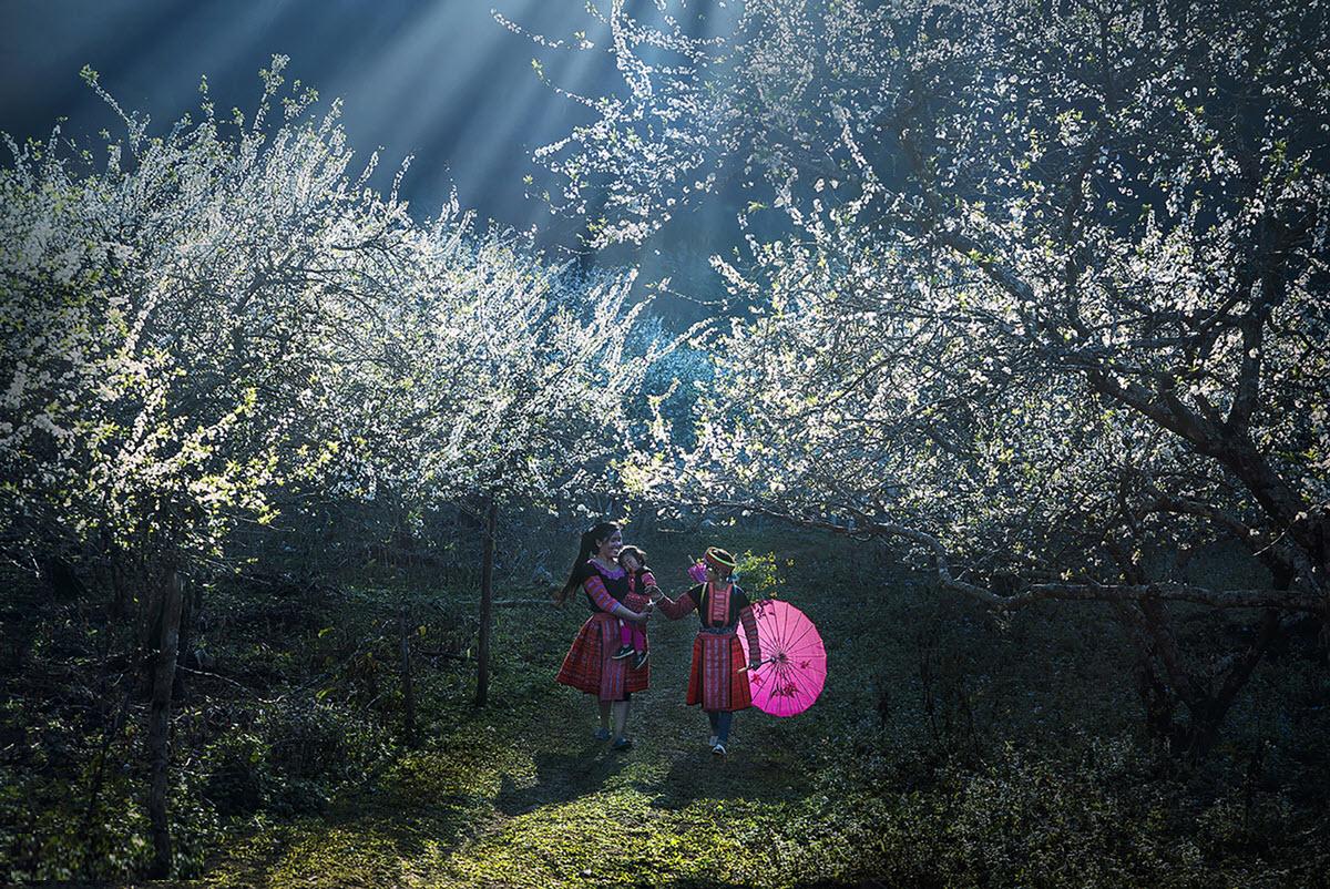 Ảnh mùa xuân trên khắp Việt Nam