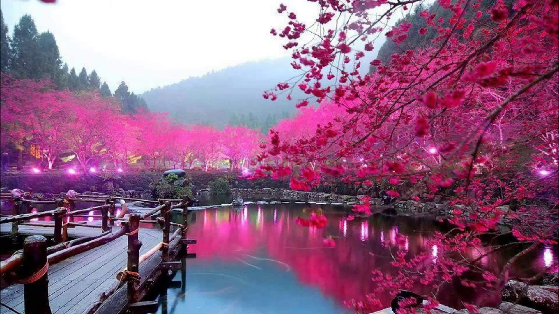 Ảnh phong cảnh màu xuân đẹp nhất