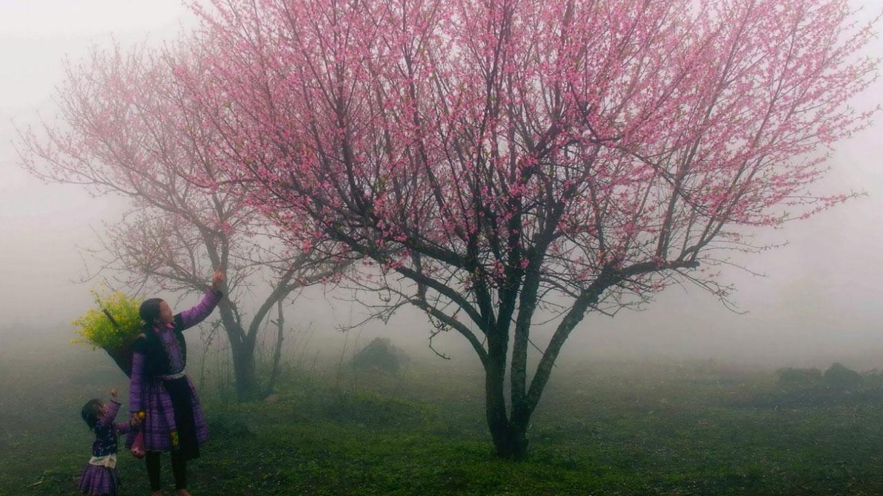 Ảnh Sapa mùa xuân