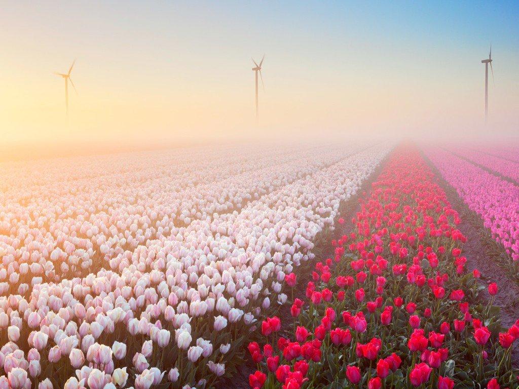 Ảnh vườn hoa mùa xuân