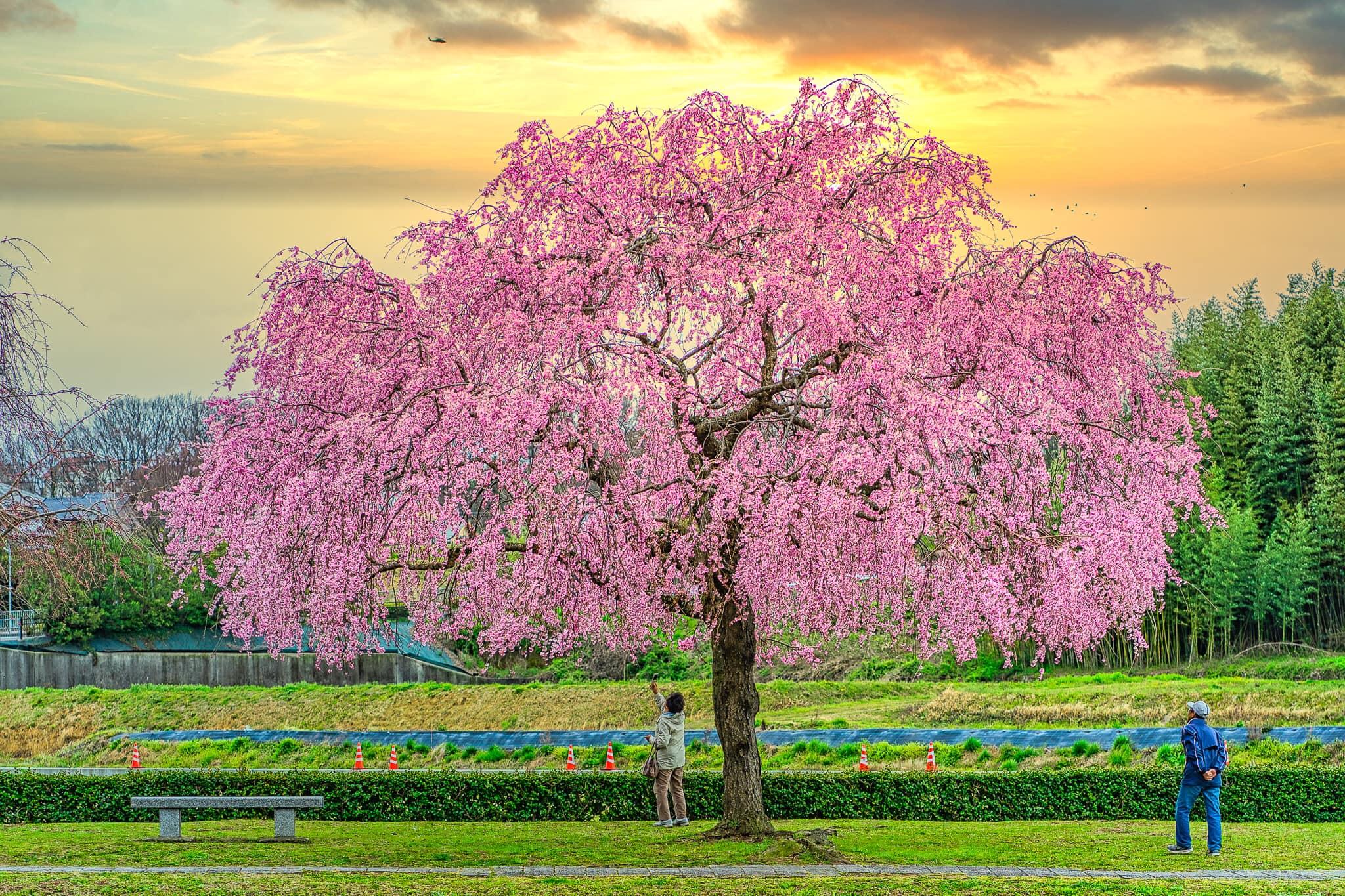 Hình ảnh mùa xuân tuyệt đẹp