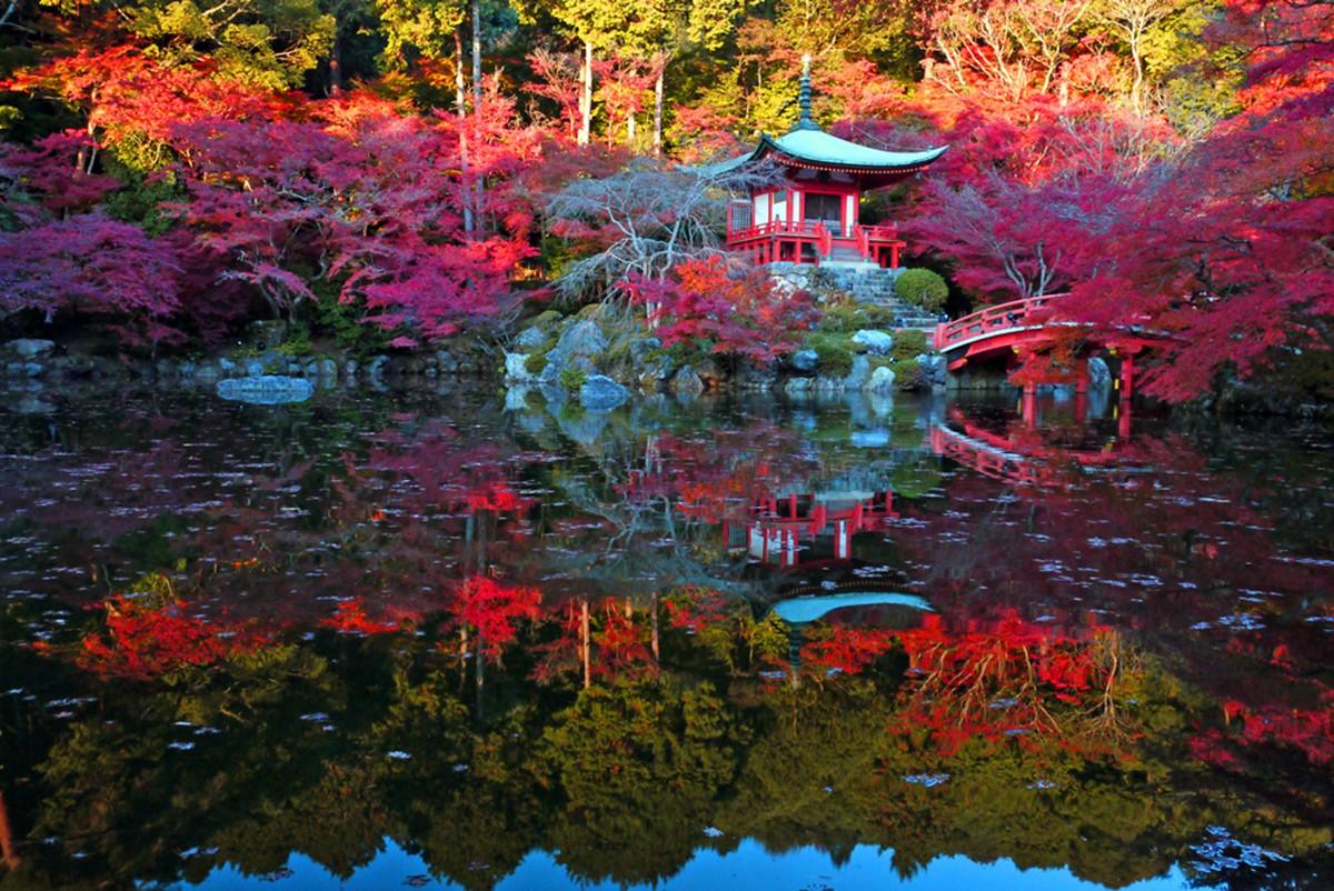 Ảnh đẹp Kyoto mùa lá đỏ