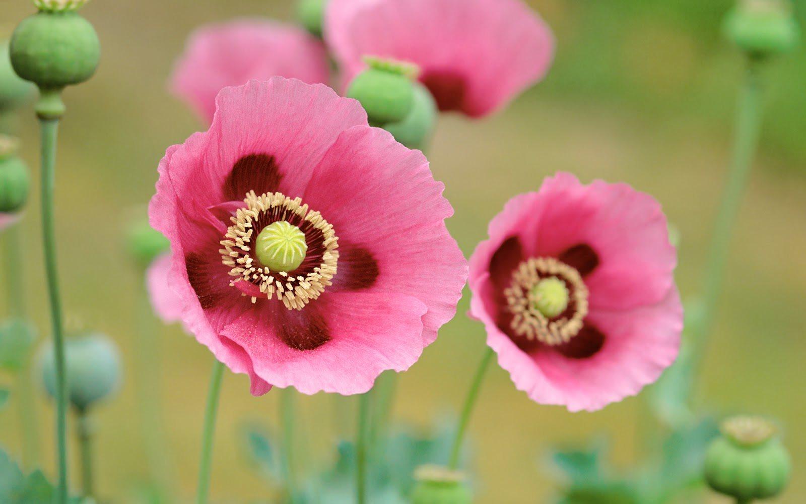Ảnh hoa đẹp độc đáo